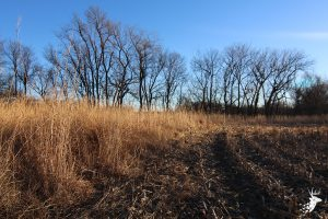 Hunting and Prime Tillable Acreage photo