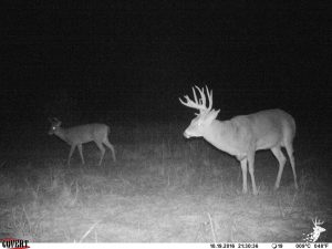 Great Hunting with Income and Building Opportunity photo