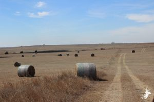 Diverse Hunting Property with CRP Income and Highway Frontage photo