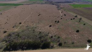 Affordable acreage with excellent upland hunting and income photo