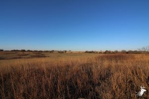 Shawnee County Tillable Acreage and Hunting photo