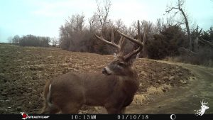 Excellent Whitetail Habitat with Tillable Acreage photo