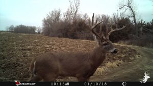 Country Home Surrounded by Excellent Whitetail Habitat photo