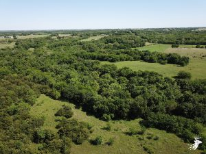 60 M/L Acres with Variety of Hardwoods and Streams photo