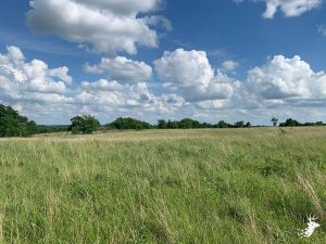 Prime Native Grass Farm for Cattle and Hunting photo
