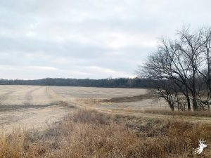 Small Acreage Bottom Ground Farm photo