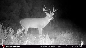 Whitetail Deer and Wild Turkey Retreat with Crop Income photo