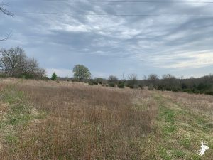 Potential Build Site with Mix of Pasture and Timber photo