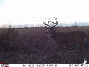 Diverse Hunting Property and Build Site photo