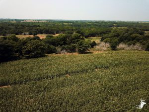 Build Site, Tillable, Pasture Ground with Excellent Hunting Opportunities photo
